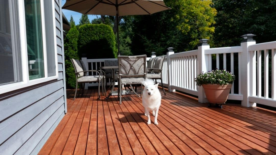 Traxion – The Perfect Non Slip Stair Treads for Pets?