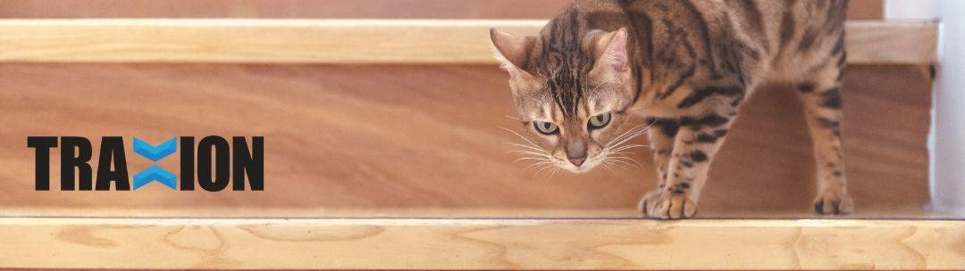 A cat walking down stairs.