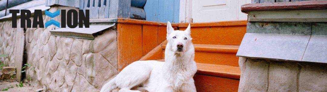A dog sitting near stairs outside a home.